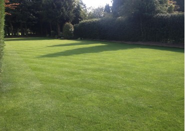 Turf & Artificial Lawn